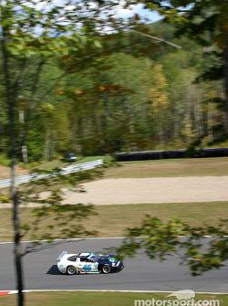 Morgan Dollar Motorsports Corvette