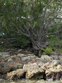 Visit to Biscayne National Park
