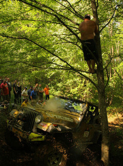 Every time a car hit the tree the crowd cheered
