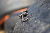 A worn Pirelli tyre