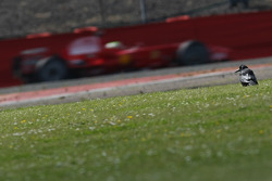 Felipe Massa, Scuderia Ferrari, F2008 and a crow