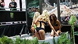 Monster Energy girls girls girls