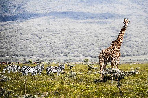 Galeria: WRC i powrót do Afryki