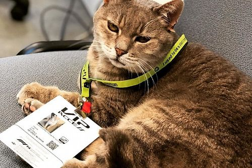 The secret of Imola's lucky F1 paddock cat