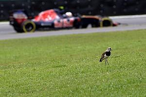 Fórmula 1 Noticias Sainz se encomienda a la lluvia en Interlagos para remontar desde el 15º