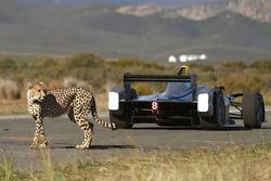 Ein Gepard mit einem Formel-E-Einsitzer