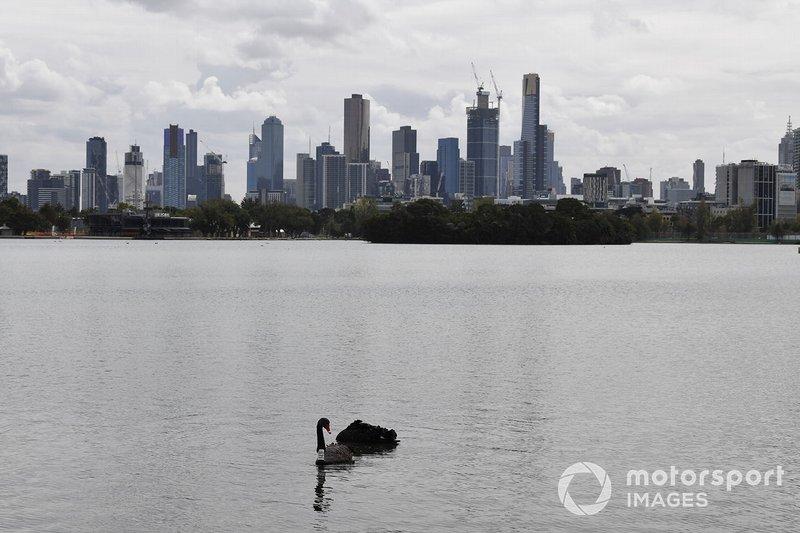 Aves en el lago Albert Park, frente al horizonte de Melbourne