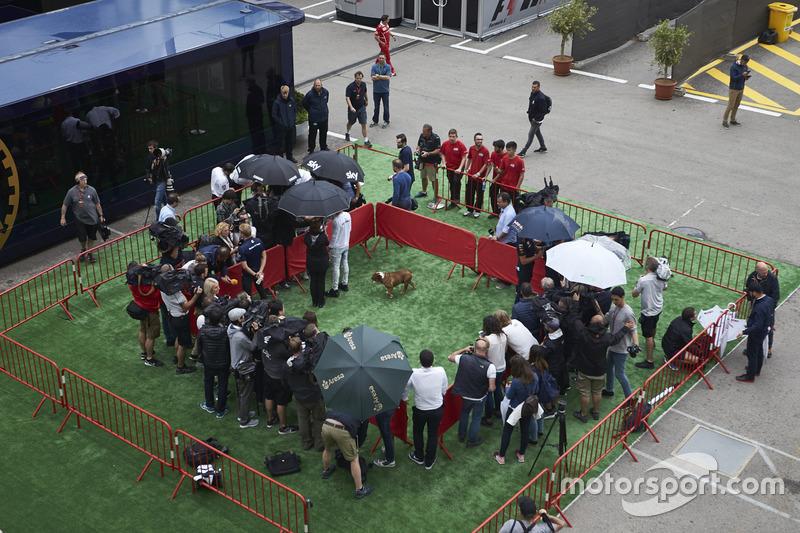 Гонщик Mercedes AMG F1 Льюис Хэмилтон, его пёс и другие пилоты в медиазоне