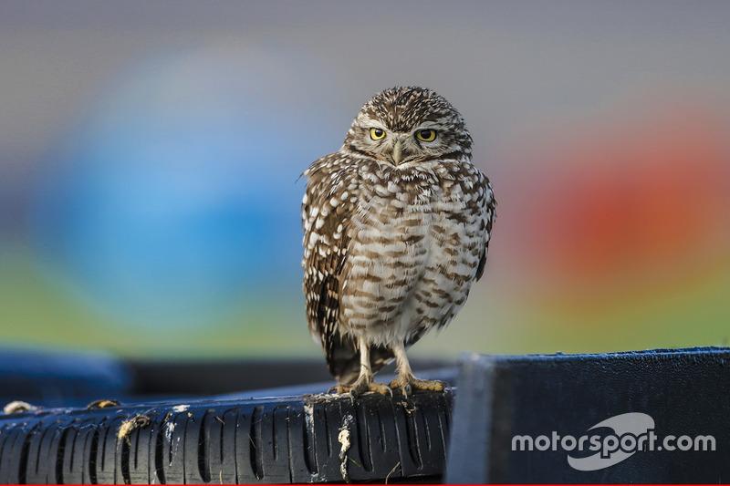 Un pájaro observa la acción