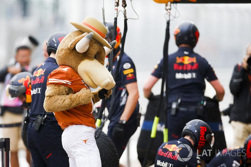 Mascota de los cuernos largos de Texas en el pit lane de Red Bull team