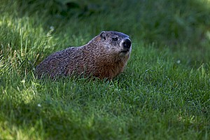 Formula 1 Breaking news FIA explains why groundhog incident couldn't be prevented