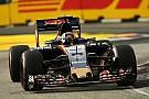 Toro Rosso superó las expectativas incluso de su jefe