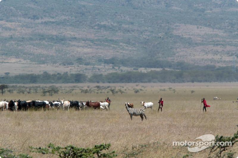 Vida salvaje en Kenia