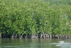 Un marais de mangliers à Key Largo