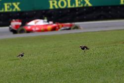 Kimi Raikkonen, Ferrari SF16-H passeert twee vogels