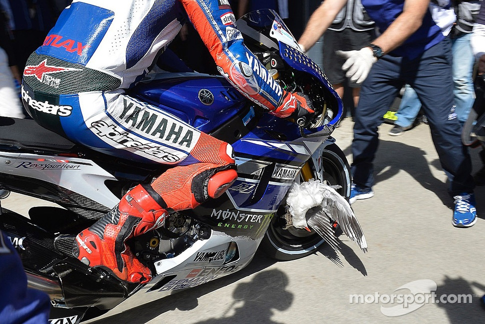 A bird stuck in the wheel of Jorge Lorenzo, Yamaha Factory Racing