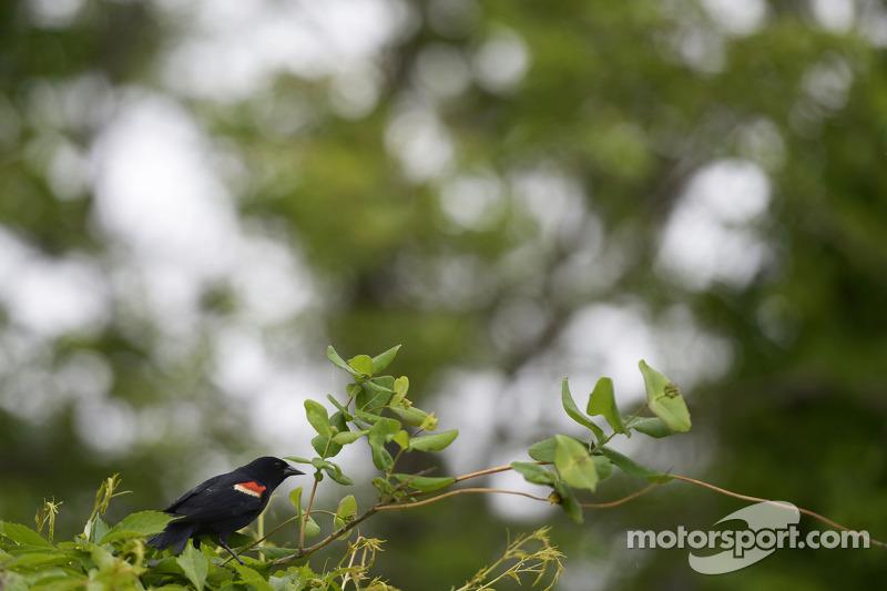 A bird beside the circuit