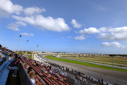 Oldfield grandstand is open for fans during testing