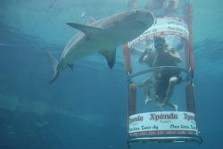 Oliver Jarvis and Khalil Beschir at the Ushaka Marine World Shark tank