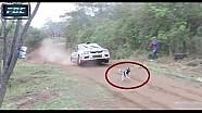 Cachorro escapa da morte em rali
